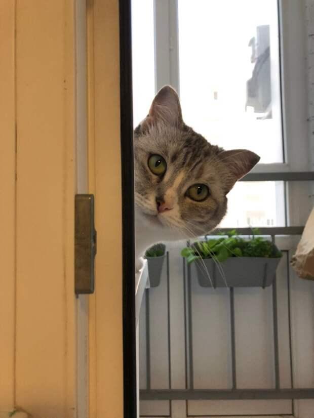 Питомец от читателя животные, история, кошка, питомцы, фото