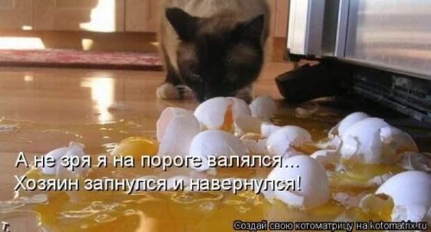 Лучшая котоматрица недели (34 фото)