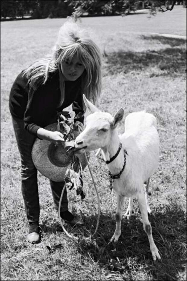 Брижит Бардо и животные (фото): козочка/ Brigitte Bardot & animals (Photos): goat