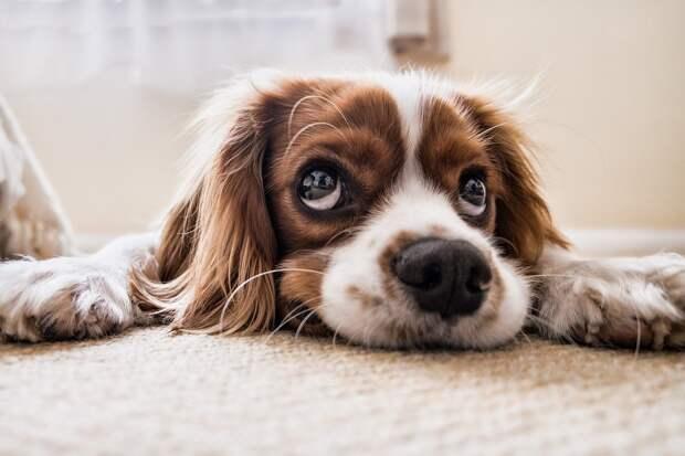 Учёные рассказали об опасности собак для человечества
