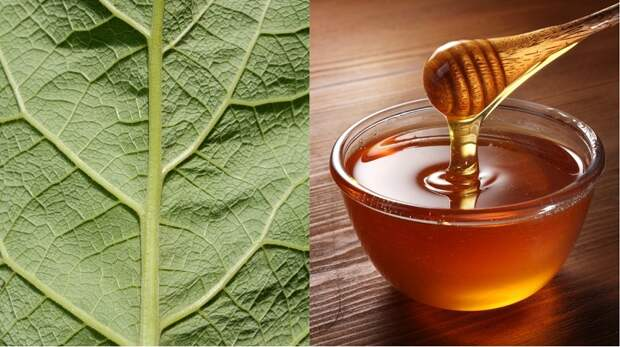 применение сока из листьев лопуха