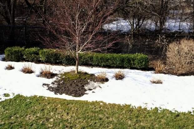 Защита деревьев от заморозков