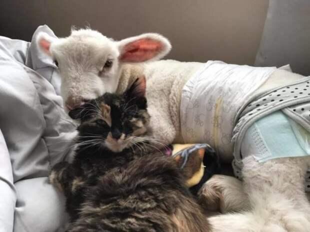 котик и козленок