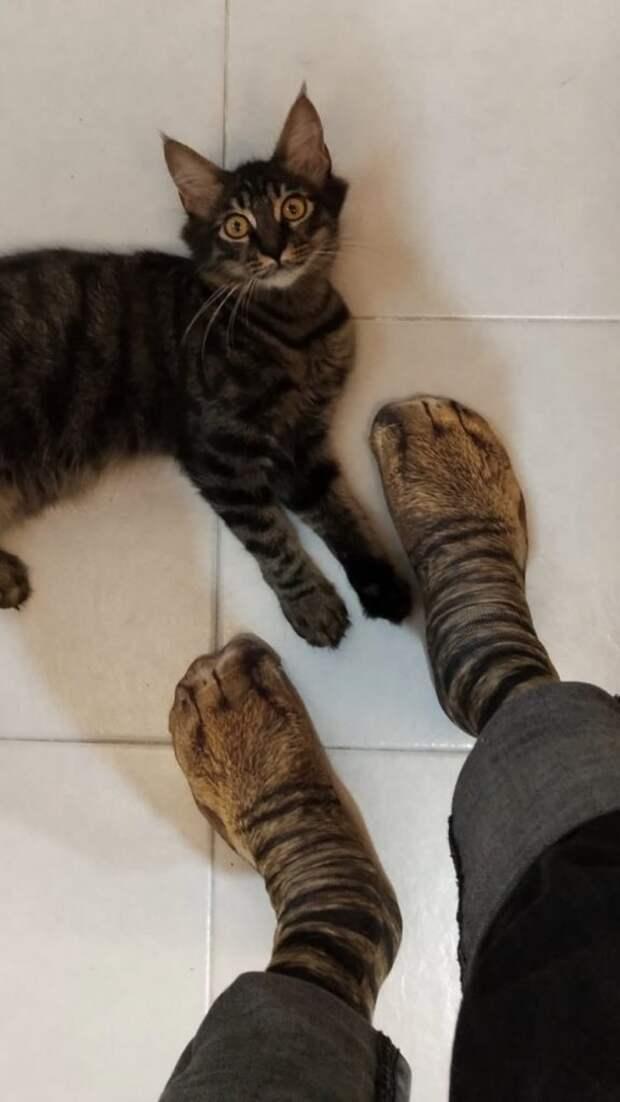 После покупки носков семья, включая котиков, хочет запретить отцу шопинг