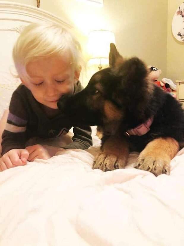 Мать девочки зашла в комнату и замерла: малышка накрывала щенка полотенцем и что-то ему говорила…