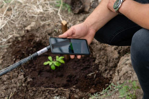В КФУ оцифровали первую в России оливковую рощу в теплице