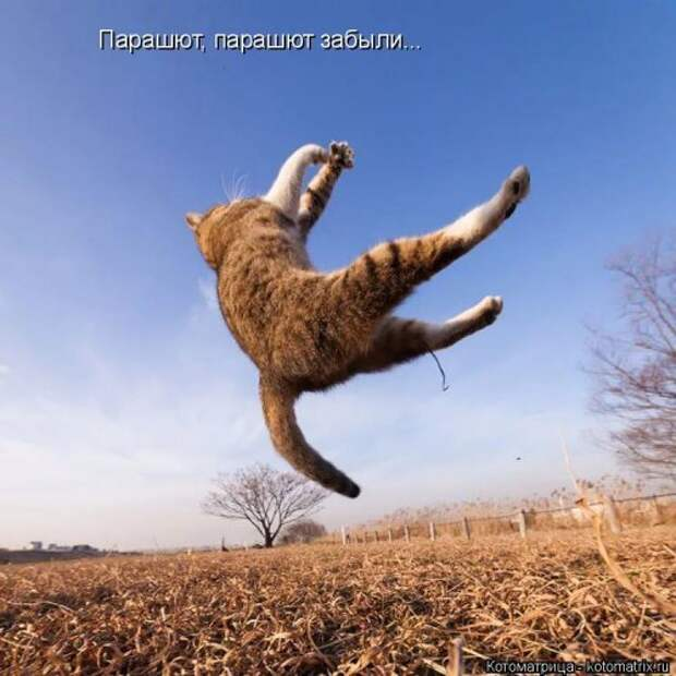 Свежая котоматрица для всех (31 фото)