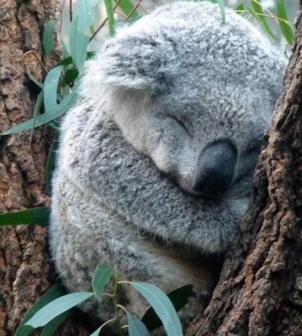 17 лениво-умиротворенных зверушек покажут вам, как провести выходные
