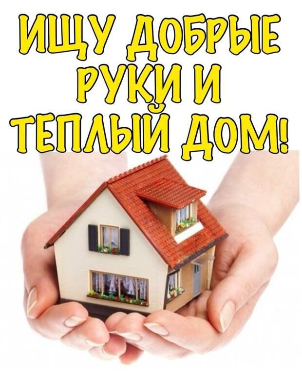 Славное сердечко ищет передержку или дом!