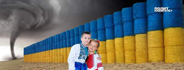 «Страна сходит с ума» – крашеную солому сделали символом Украины