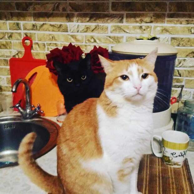 Открылась дверь магазина, и в нее был зашвырнут рыжий котёнок...