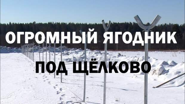 Один из крупнейших ягодников России откроется в Щёлково