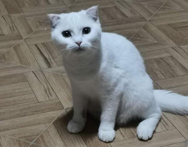 Хозяйка хотела вылечить кота с помощью куркумы. Теперь он похож на Пикачу