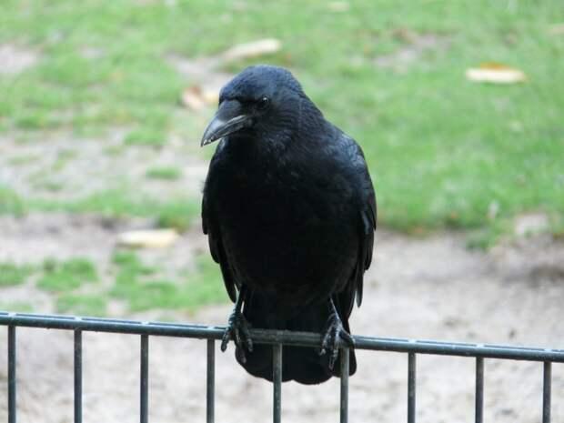 (Видео) 18-летнего парня обокрала ворона. И это было возмездие!