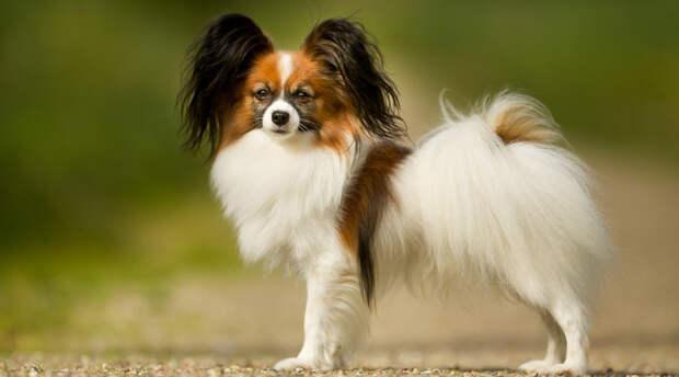 10 самых умных пород собак по словам ученых