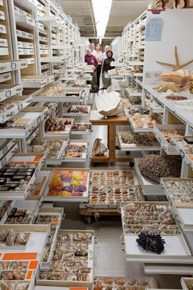 Масштабы, потрясающие воображение: тайные коллекции Американского музея естественной истории
