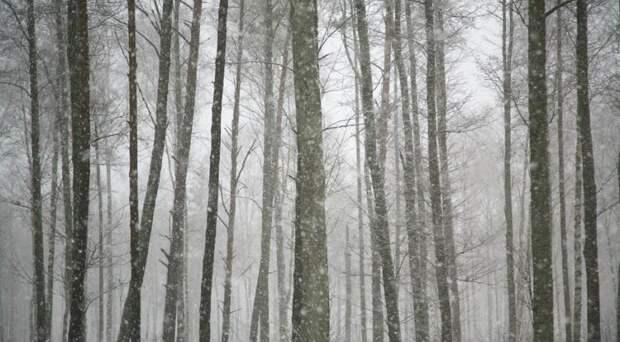 Что есть зимой в ненастную погоду без солнца