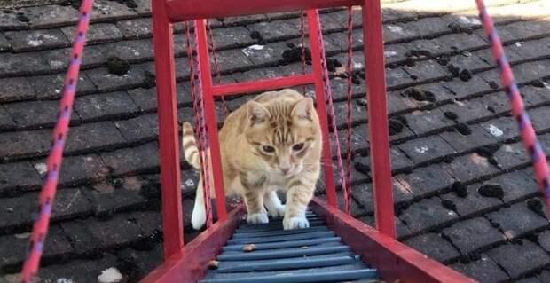 Чтобы кот не упал, прыгая из окна, хозяин построил ему мост в мире, животные, забота, история, кот, люди
