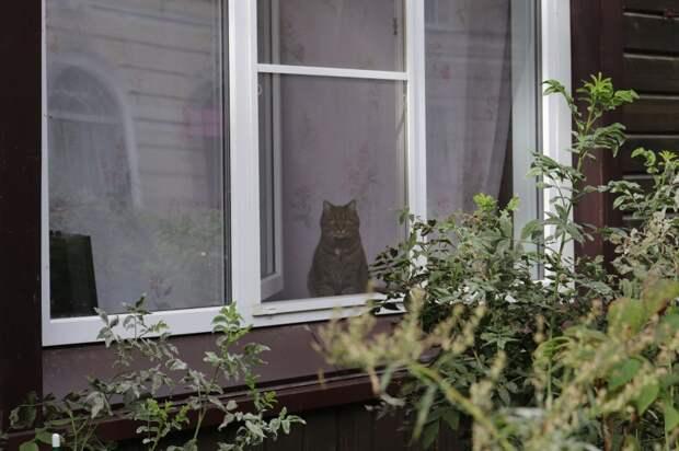 Кстати, с котейкой в окне поздоровайтесь