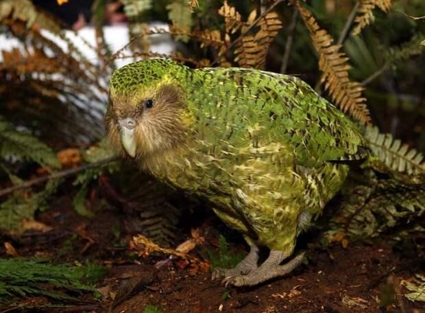 10 не летающих птиц, доживших до наших дней