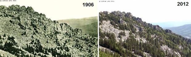"""На Урале меняется экосистема: """"Лысые"""" горы за 100 лет покрылись лесами"""