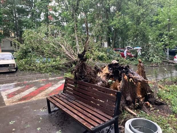 На Туристской ураган повалил дерево на детскую площадку