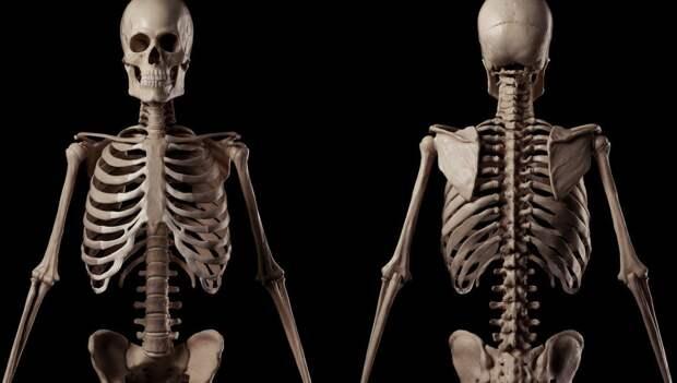 Австралийские ученые предложили заменять поврежденные кости гелем с живыми клетками