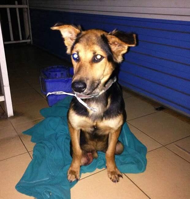 Трогательная история парализованного щенка Лео, найденного на пляже