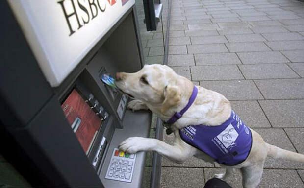 В крайнем случае, он и один справится с задачей Охранники, банкомат, безопасность, деньги, друзья человека, животные, охрана, собаки