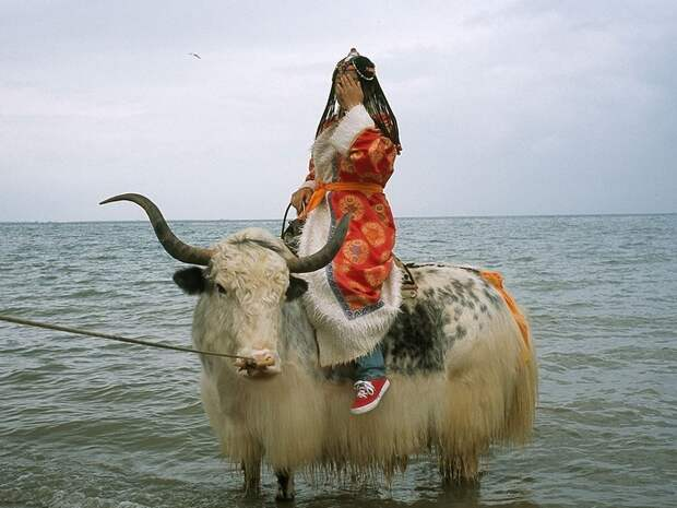 Невеста на яке