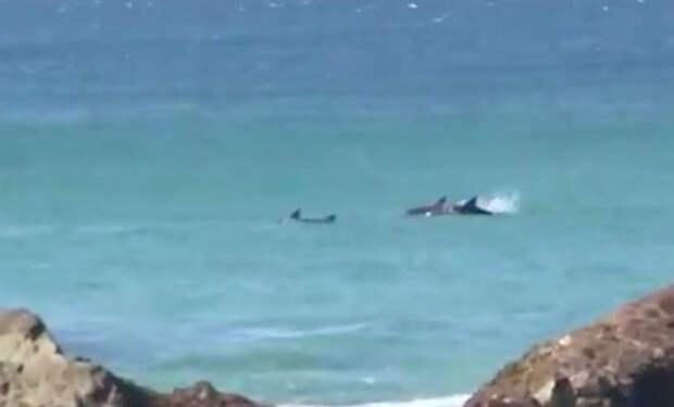 Большая белая акула нацелилась на женщину, но на защиту пришел муж владеющий боксом