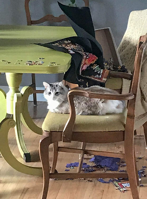 """Заведи себе кошку, – говорили они. – Кошки — это уют в доме!"""