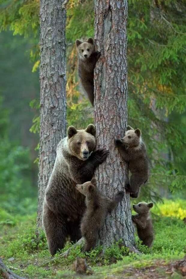 Позитивный мир дикой природы (12 фото)