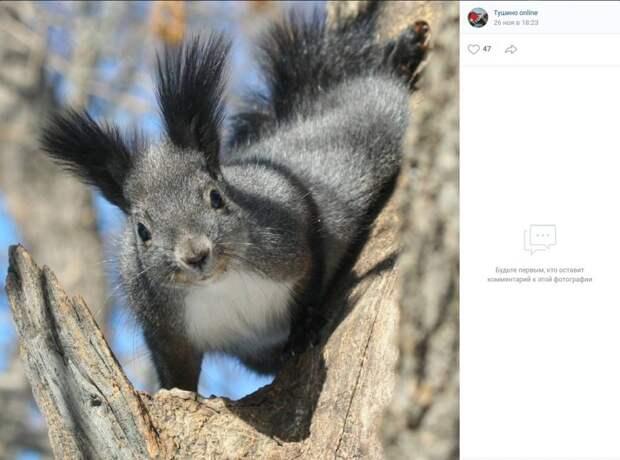 Фото дня: американская белка из Алешкинского леса