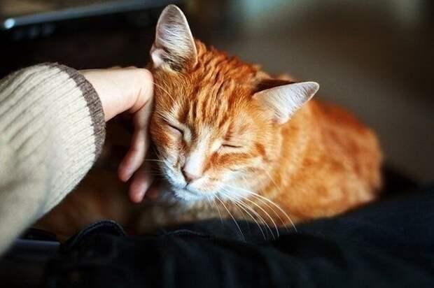 Почему нельзя отгонять от себя кошку? НЕЛЬЗЯ, Они, когда, кошек, об тебя, отгонять, трутся