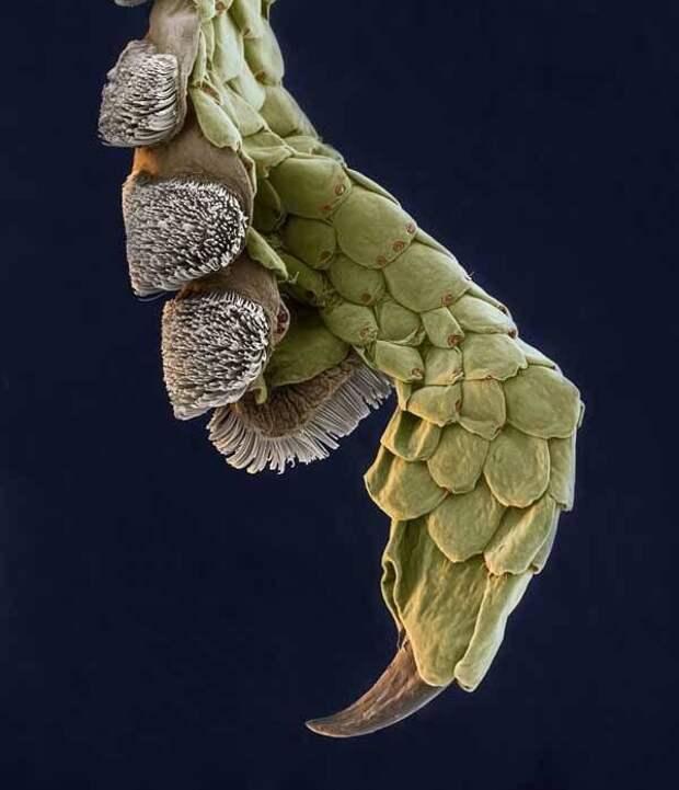 То, что периодически по нам ходит: милые лапки под микроскопом