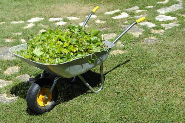 Не стоит вывозить выполотые сорняки на свалку - они выступят в роли мульчи
