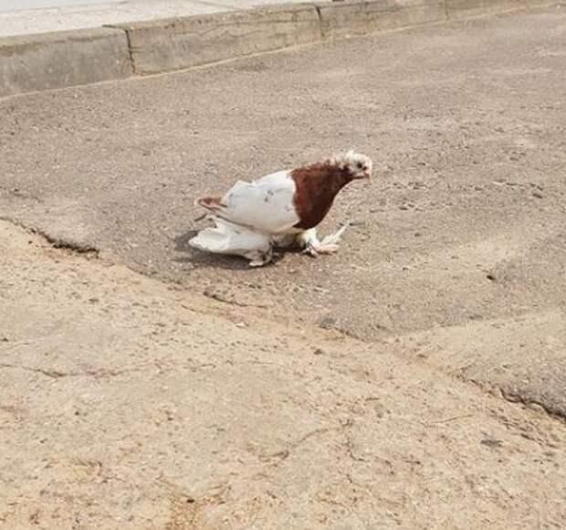 Жители Северного обнаружили потерявшегося голубя