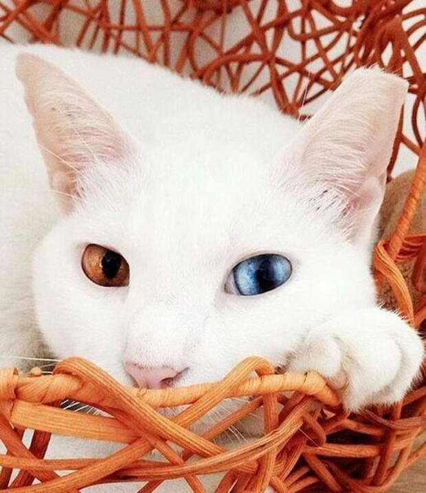 Что притягивают в дом кошки?