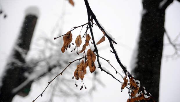 Метель и до 0 градусов ожидается в Подольске в четверг