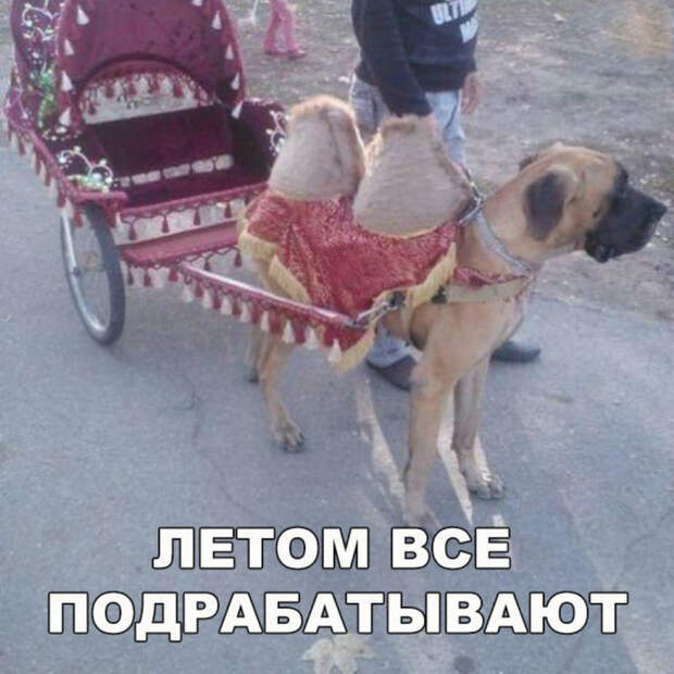 Дед одевается, собирается на улицу. Бабка: - Куда собрался, старый?...
