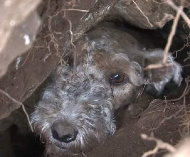 Собака смотрит из ущелья