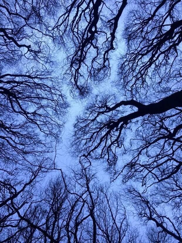 18. Деревья завораживающе выстраиваются в линию идеально, красиво, перфекционизм, фото, четко
