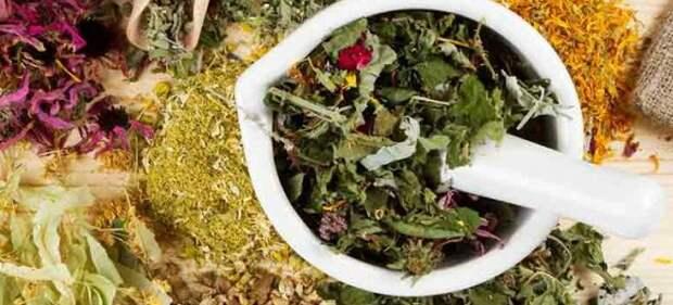Мочегонные травы при отеках, гипертонии и сердечной недостаточности, для похудения