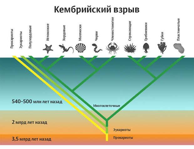 Все современные виды появились на Земле внезапно? Ученые не верят