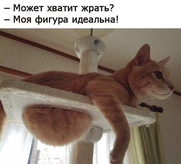 Кошачий позитив