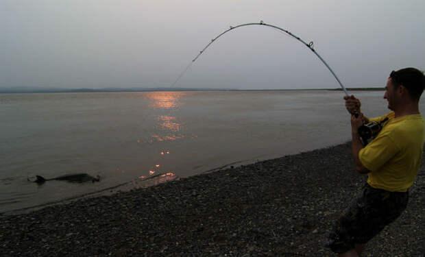Ловля гигантов в Охотском море: рыбины больше 100 килограмм