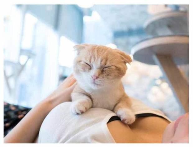 «Котики и груди»: создана самая умиротворяющая фотокнига