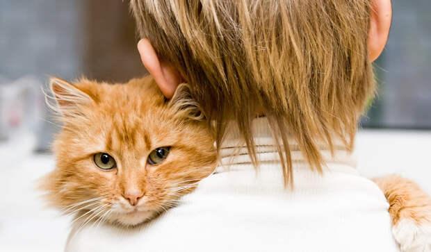 Вот как кошки чувствуют негативную энергию в доме