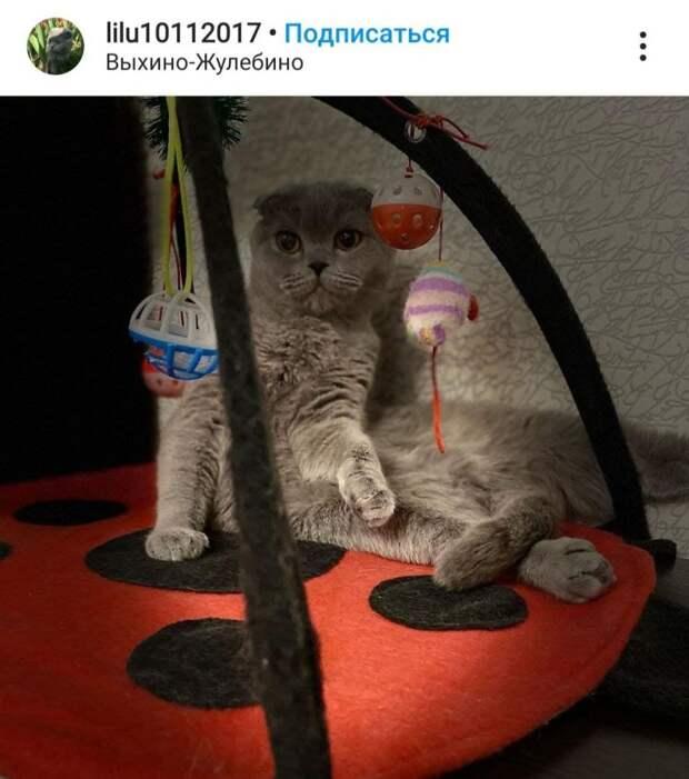 Фото дня: кошачье развитие в Выхине-Жулебине
